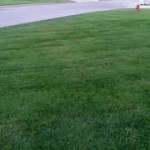 download2 fescue yard